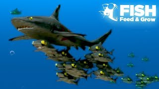 Download THE GIANT SHARK SHOAL!! - Fish Feed Grow | 21 Video