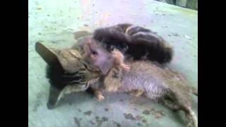 Download cat slaughter rat. WHAT CATS SHOULD DO! Video