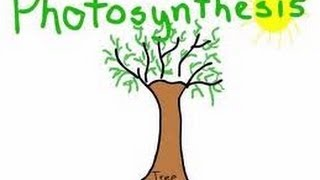 Download Photosynthesis in plants Animation for Kids Video