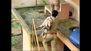 Download Kerala rains : മഴയുടെ ദുരിതം മനുഷ്യര്ക്ക് മാത്രമല്ല Video