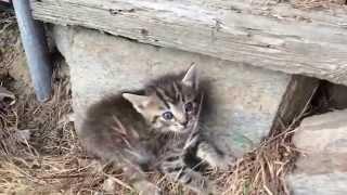 Download Scared kitten in the backyard Video