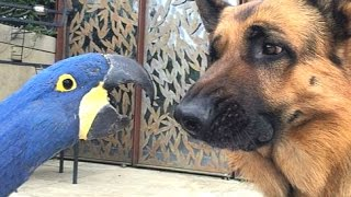 Download Best Of Funny Parrots Annoying Dogs Compilation || NEW HD Video