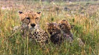 Download Felinos de África - Disney Nature - Walt Disney Studios Oficial Video