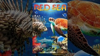 Download Red Sea Video