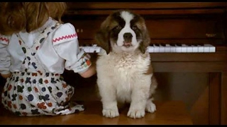 Download beethoven (1992)- beethoven as puppy scene Video