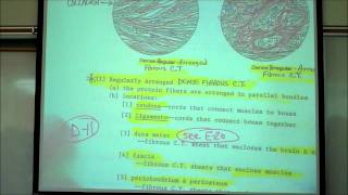 Download HISTOLOGY; CONNECTIVE TISSUES; Part 1 by Professor Fink Video