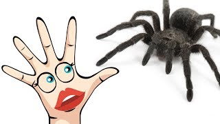 Download Colors Learn Spider Finger Family Song Video