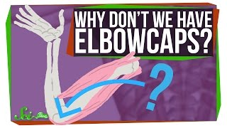 Download Why Don't We Have Elbowcaps? Video