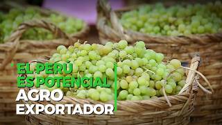 Download Perú conquista al mundo con productos de agroexportación Video