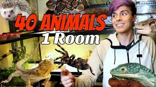 Download Animal Room Tour In My New House! | 40 Animals in 1 Room Video