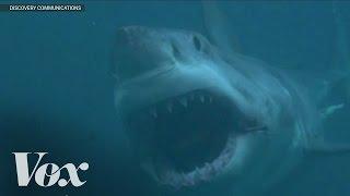 Download Does Megalodon still exist? Shark Week debunked Video