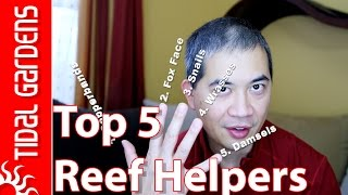 Download Top 5 Helpful Reef Aquarium Critters Video