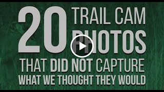 Download 20 Trail Cam Photos That Did Not Capture What We Thought They Would - WIDE OPEN SPACES Video