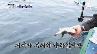 Download 마닷도 박 프로도... 왔다하면 #여기가 복어의 나라입니까 Video