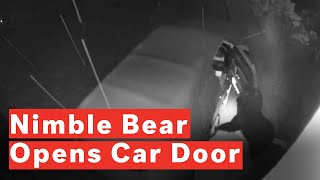 Download Crafty Bear Opens Car Door For Inspection Video