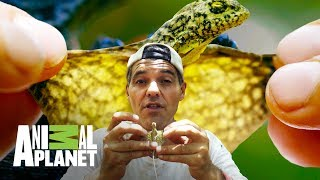 Download Aventuras con Wild Frank: Los dragones de Frank | Animal Planet Video