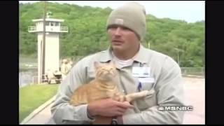 Download Prisoners and their cats. Video