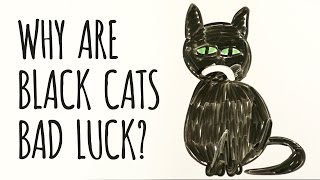 Download Why Are Black Cats Considered BAD LUCK? Video