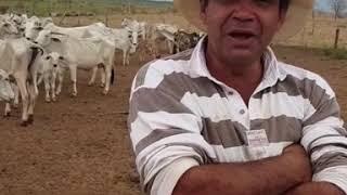 Download A saga de Roy no Velho Texas Parte 01 Video
