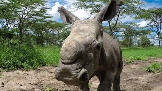 Download GoPro Cause: Last of the Rhinos – Baby Ringo Video