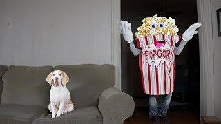 Download Funny Dog vs Giant Popcorn Man Prank: Funny Dog Maymo Video