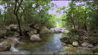 Download Qantas Guided Meditation Series in 360 - Mossman Gorge, Queensland Video