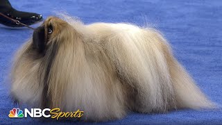 Download Full Best in Show at 2016 National Dog Show Video