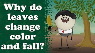 Download Why do leaves turn yellow? | #aumsum #kids #education #science #learn Video