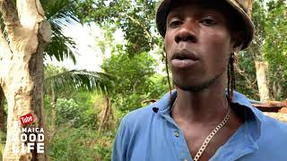 Download JAMAICA GOOD LIFE - EP263 - S2, King Baba and Farmer Denny and His Pigs Video