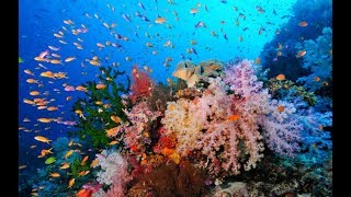 Download Top 15 Most Beautiful Coral Reefs In The World And Amazing Underwater Life | Part - 3 Video