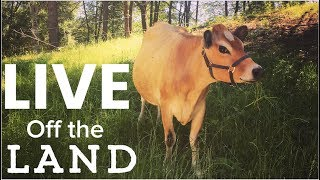 Download Living off the Land - Feed Your family from Your homestead Video