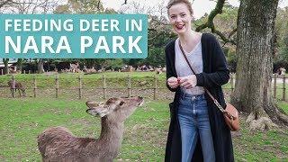 Download FEEDING DEER IN NARA PARK Video