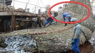 Download Fishermen Found Something Unexpected In Their Fishing Net Video