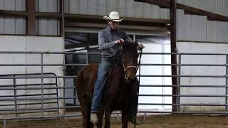 Download Pickup and First Day of Training a Wild Horse || Extreme Mustang Makeover 2018 || Aiden Kramer Video