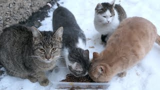 Download Cats eating food on the snow Video