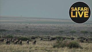 Download safariLIVE - Sunrise Safari - August 28, 2018 Video