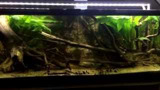 Download Amazon Biotope aquarium with Altum Orinoco F3 Video
