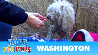 Download Badly injured stray poodle bites Hope For Paws rescuer and sends her to urgent care. Video