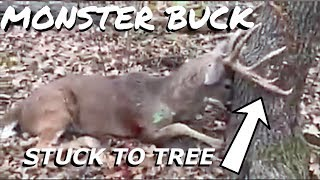 Download Monster Buck Dies Stuck To Tree S8 Video