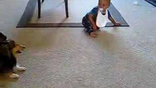 Download Excited dog makes baby laugh! Video