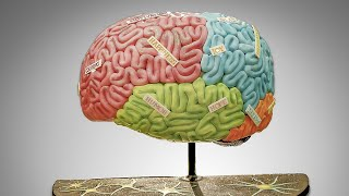 Download Giant Brain Cake and More Video