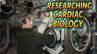 Download Cardiac Biology In Space Video