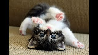 Download Cute Funny Kittens 😜🐱 Funny Cats (Full) [Funny Pets] Video