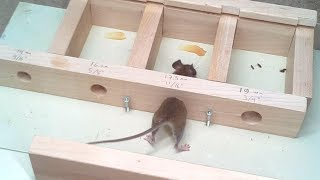 Download How small a hole can a mouse get through? Experiments. Video