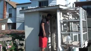 Download Guru Kendal Pure Pakistani Pigeons, Toronto, Canada Video