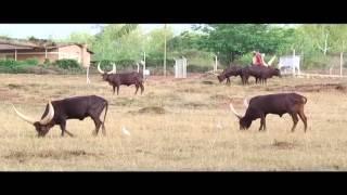 Download Replicating global farming standards in Rwanda Video