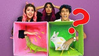 Download ¿QUÉ HAY EN LA CAJA? | RETO POLINESIO | LOS POLINESIOS Video