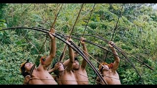 Download Gazelle indigenous in the Amazon jungle , monkeys and boar hunt Video