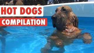 Download Funny Hot Dogs Video Compilation 2016 Video