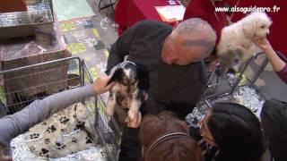Download ANIMALIA - Salon vente et exposition de Chiots - Parc expo de colmar - avril 2009 Video